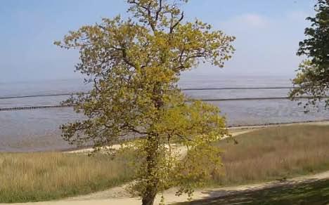 Webcam-Vorschau aus Keitum